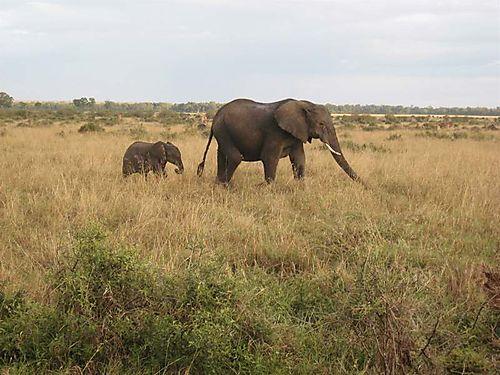 Elephantmama